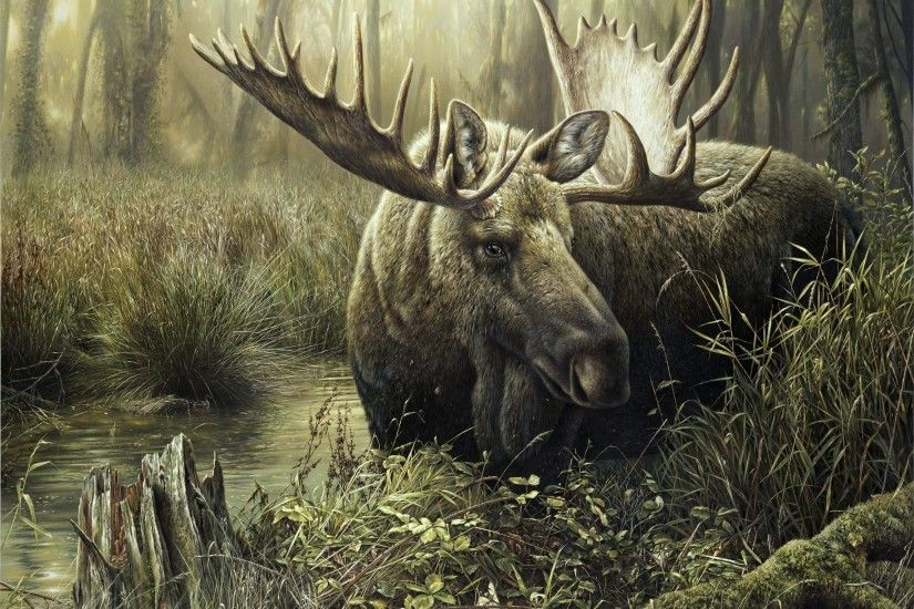 Wallpapers Moose Animals 2400x1846