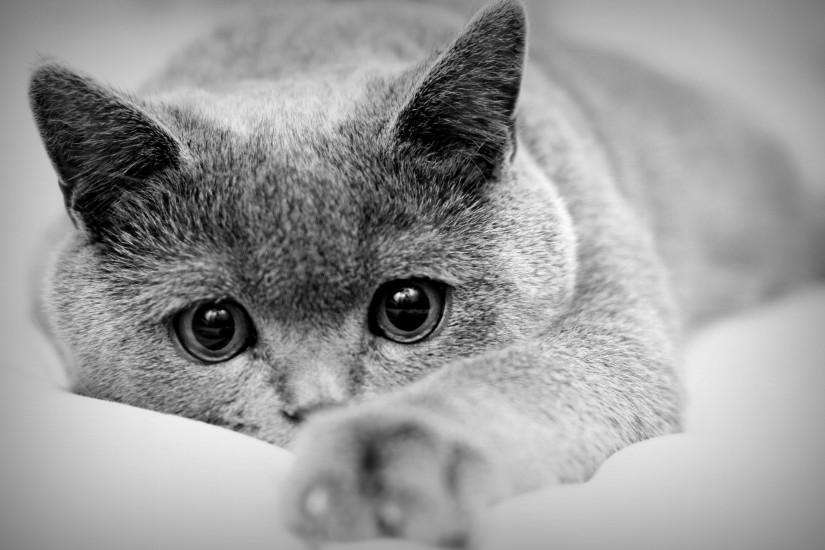 download free cat background 2560x1600 for android 40