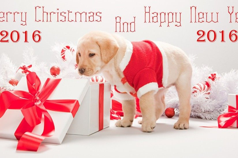 Merry Christmas wallpaper Cute Puppy with a christmas and new year message
