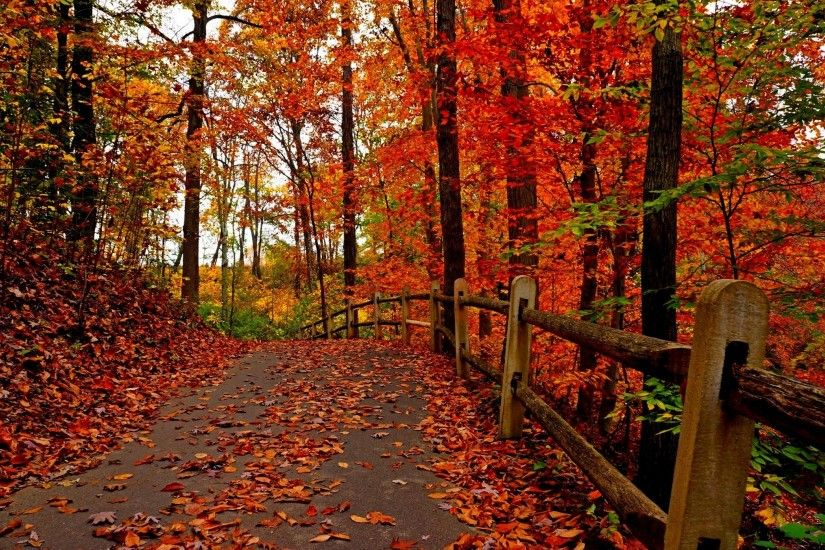 Android Wallpaper: Fall Colors | Hair and beaut | Pinterest .