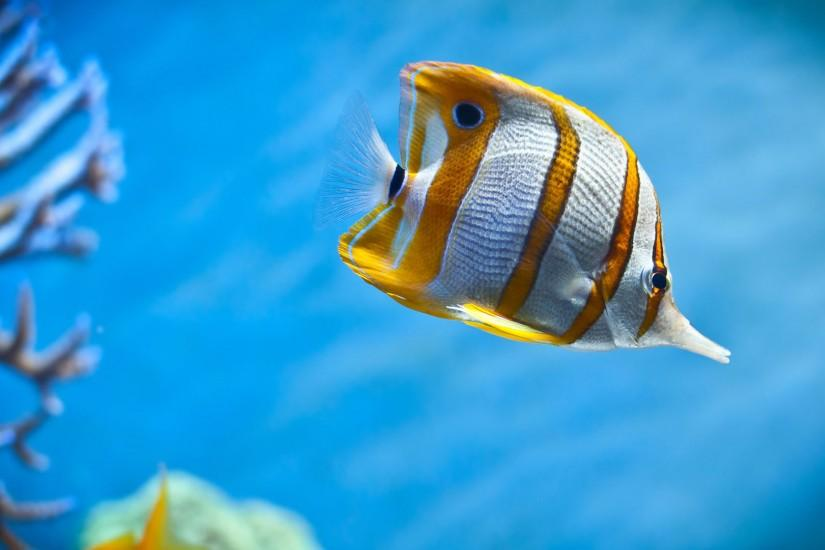 fishes in the sea | Under Sea Fish Cool Pictures Background HD Wallpaper Under  Sea Fish