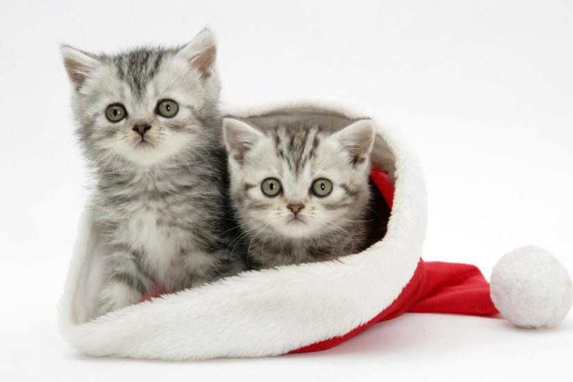 White-Cats-Christmas-Wallpaper-For-Android.jpg (1920×1200) | Wallpapers |  Pinterest | Wallpaper, Mobile wallpaper and Desktop backgrounds