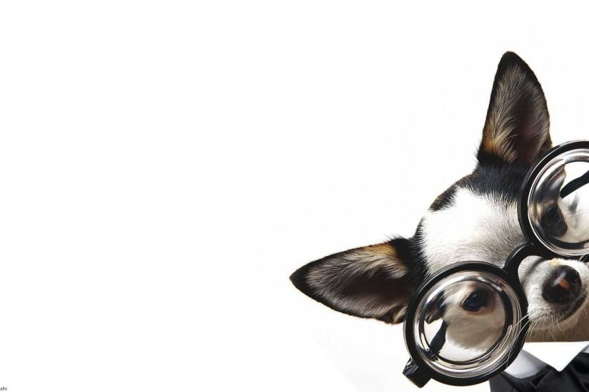 Animals - Dogs and Puppies - 1920x1080 (16:9 ratio) widescreen wallpapers -