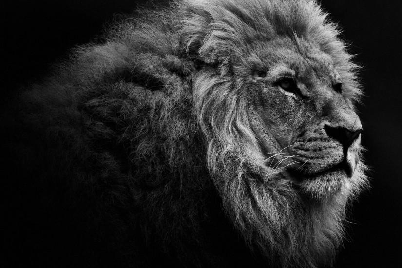... 45 Powerful Lion Wallpapers for Your Desktop