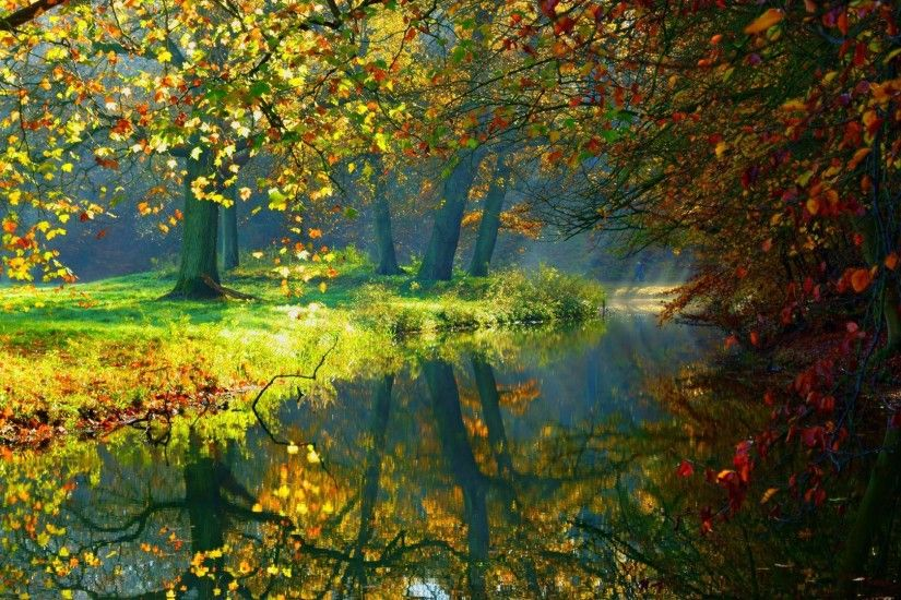 #333322 Color - Fall Splendor Leaves Forest Lake Woods Autumn Trees Nature  Water Wallpaper Beauty