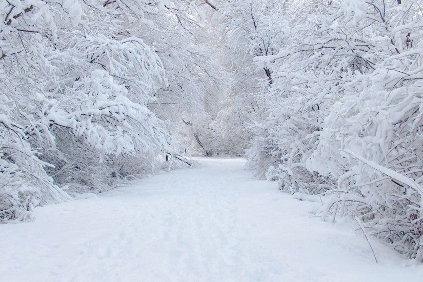 Eco-Friendly Gift Ideas For The Christmas Season. Snow BlizzardWhite  ThingsNature WallpaperSnow ...