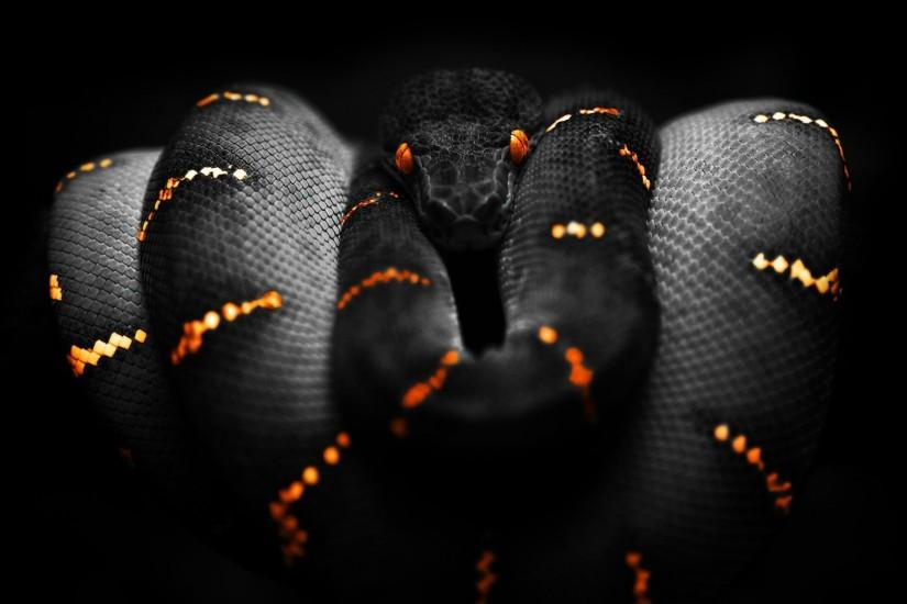 Snakes Wallpapers HD - PicVenue - HD Wallpapers