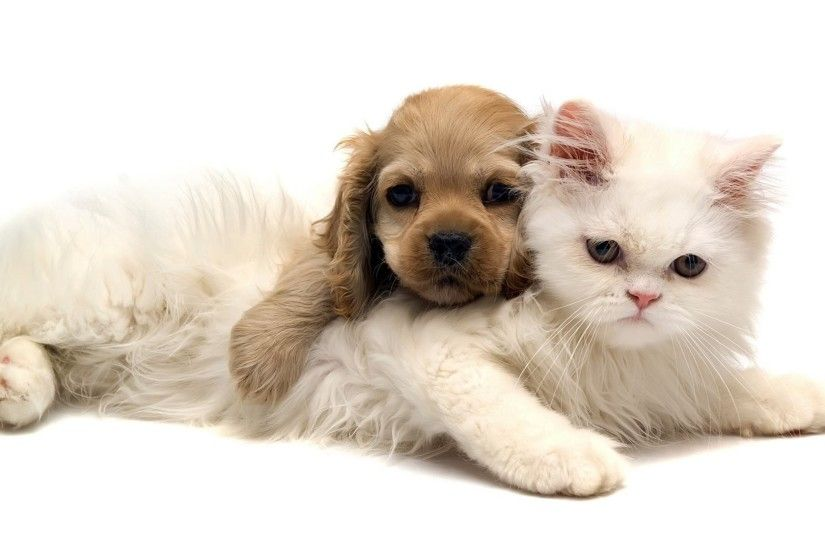 Adorable Cat and Dog Wallpaper | Wallpapers Green Cat Cute And Dog Jpg  1920x1080 | #
