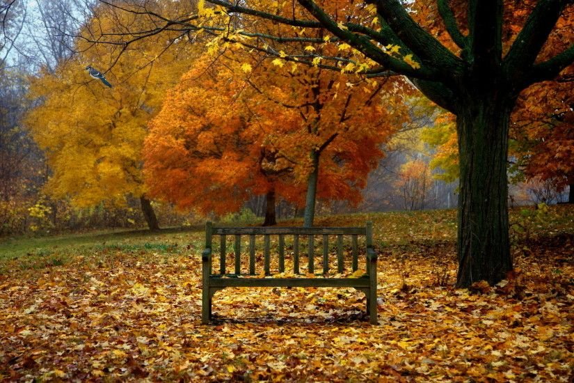 155 best Season Wallpaper images on Pinterest | Wallpapers, Autumn and Free