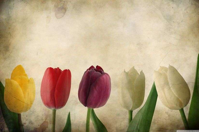 Gorgeous Tulips Vintage Desktop Wallpaper