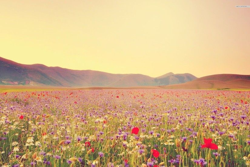 Field of wildflowers HD wallpaper #1665657