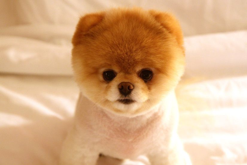Lovable 45+ Cute Dogs Wallpapers, Top Ranked Cute Dogs Wallpapers, Pc In  addition