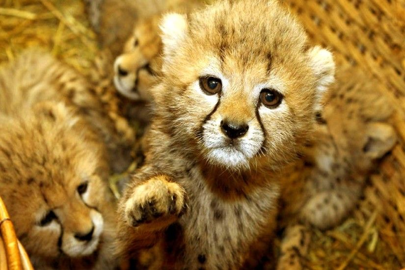 ... Baby Animal Wallpaper for Computer | Wallpapers 4k | Pinterest .