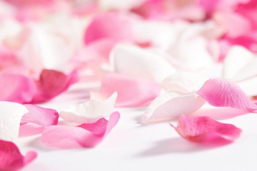 Pink Flowers and Rose Petals