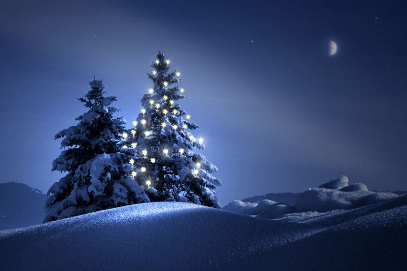 Beautiful Outdoor Christmas Trees at Night 1920x1080 wallpaper