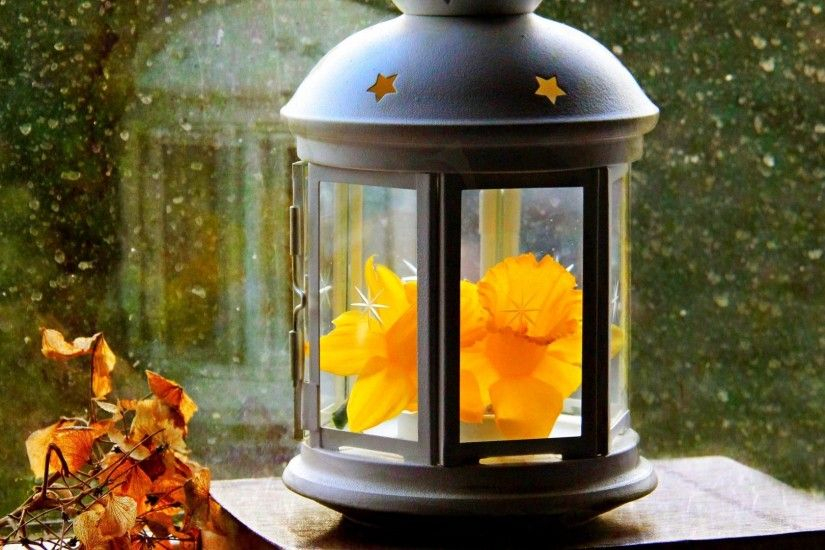 Narcissus Tag - Narcissus Drop Window Leaves Fall Autumn Flower Light Paper  Lantern Spring Drops Photo