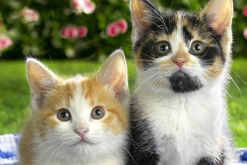 Two funny kittens picture
