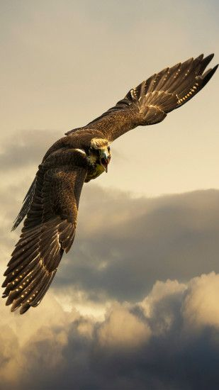Eagle Wallpapers Full HD wallpaper search