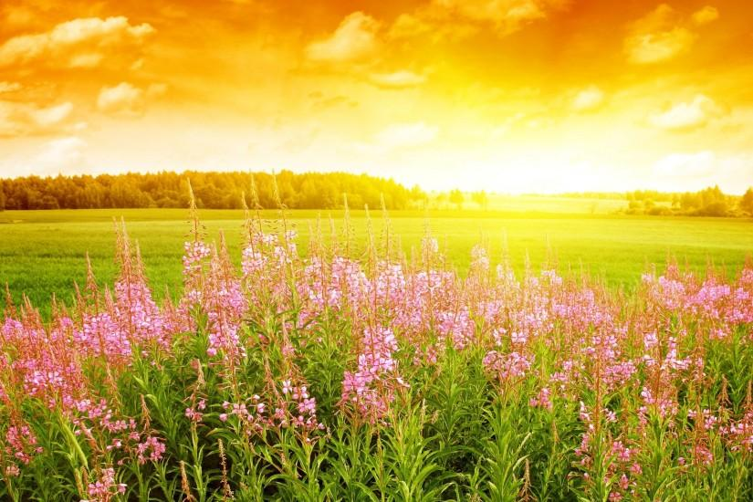 popular spring backgrounds 2560x1600