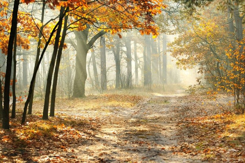 Beautiful Autumn Forest Morning HD Wallpaper