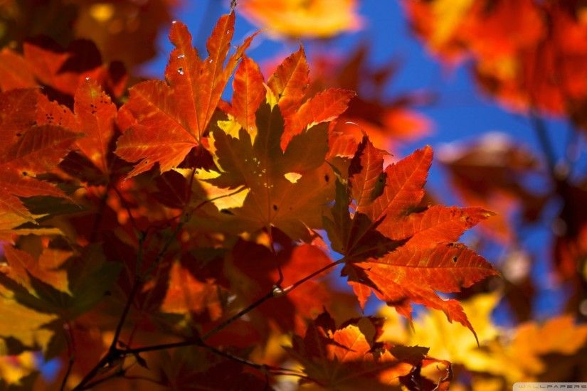 Autumn Leaves Falling Wallpaper