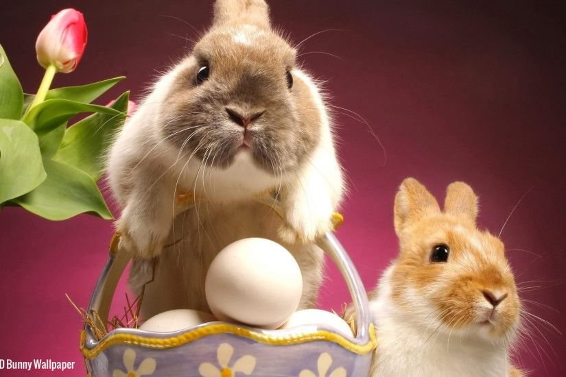 Wallpaper Easter Bunny Full HD 1080p Wallpaper High Definition 2013