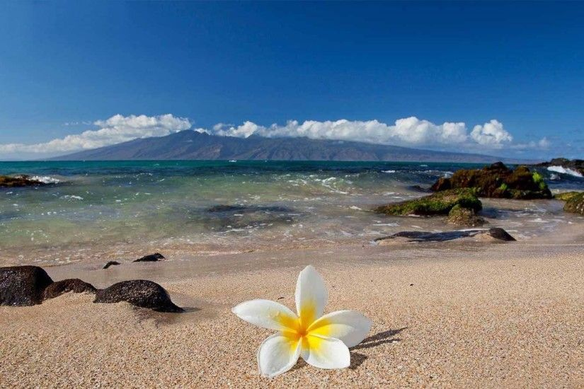 Hawaii Flower Wallpapers High Quality