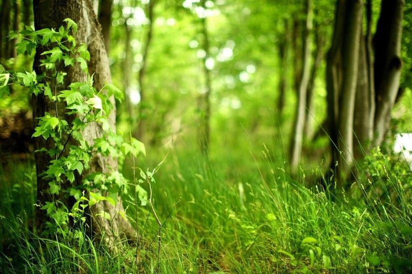 Forest Background HD 8704