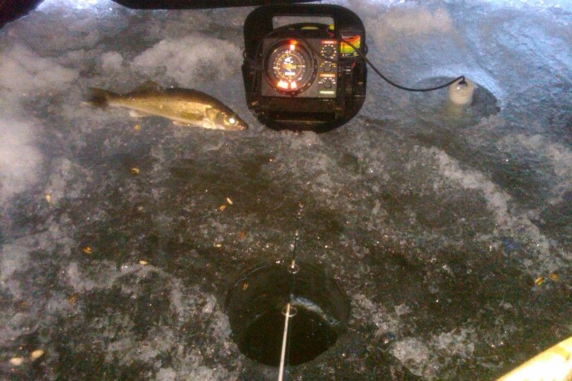 3 Basics to Increase Your Catch Rate of Walleyes