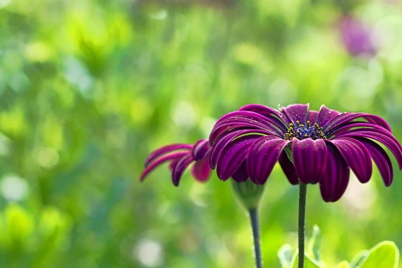 Download Convert View Source. Tagged on : Purple Flower Wallpapers ...