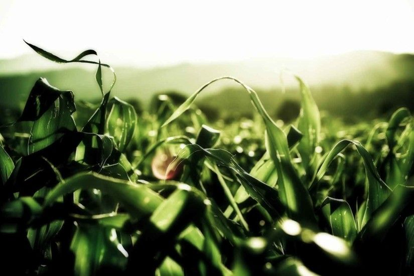 Plants Grass Lens Flare Wallpapers Scenery Nature