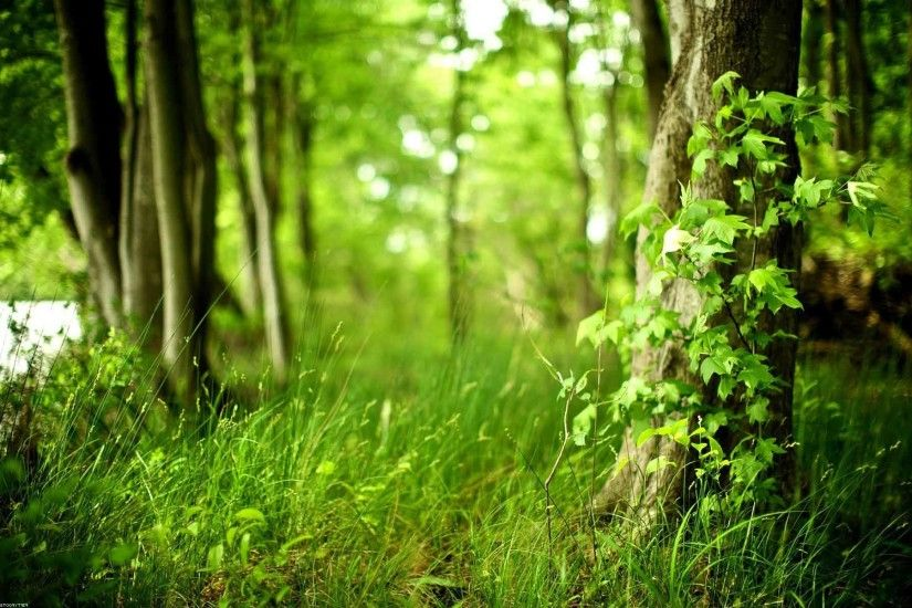 Trees Plants Nature Forests HD Abstract Wallpaper