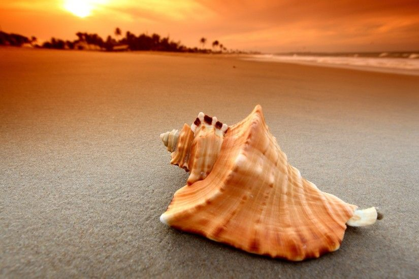 beach, Sand, Sunset, Sea, Waves, Nature, Seashells Wallpapers HD / Desktop  and Mobile Backgrounds
