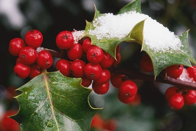 Leaves Snow Time Berries Christmas Holly Red Winter Picture Hd