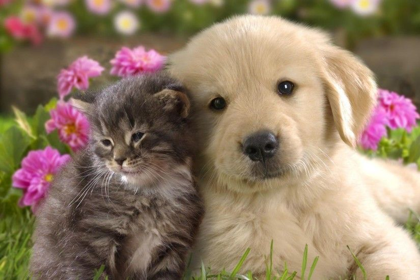 Dog And Cat Wallpaper Mobile