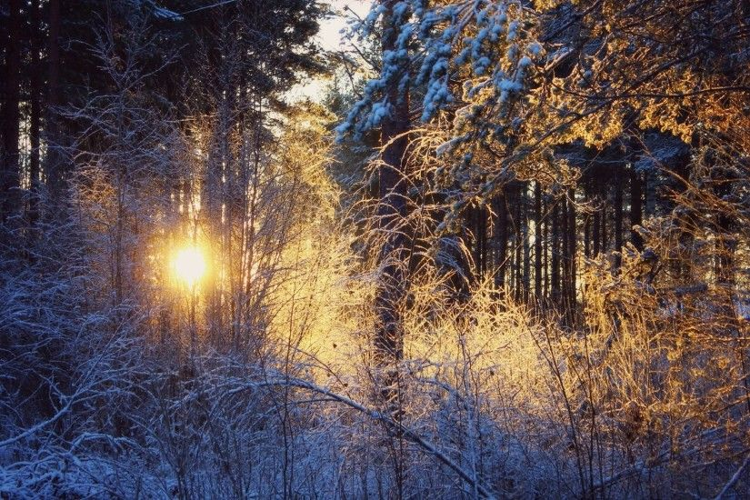 Sunrise In The Snowy Forest