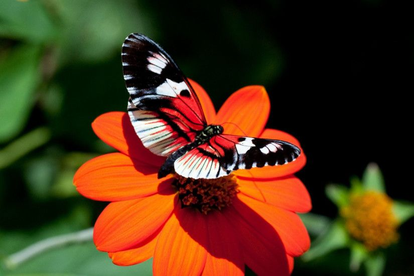 Download Pink Butterfly Wallpaper Gallery ...