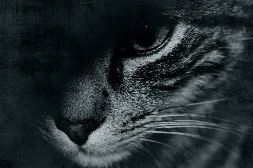 cat face eye mustache black and white eyes background wallpaper widescreen  full screen hd wallpapers fullscreen