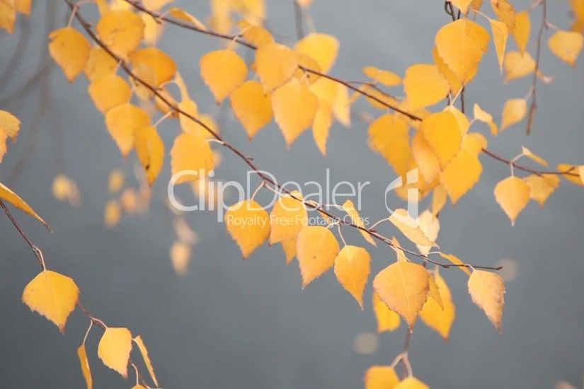Clips. Autumn background Lizenzfreier ...
