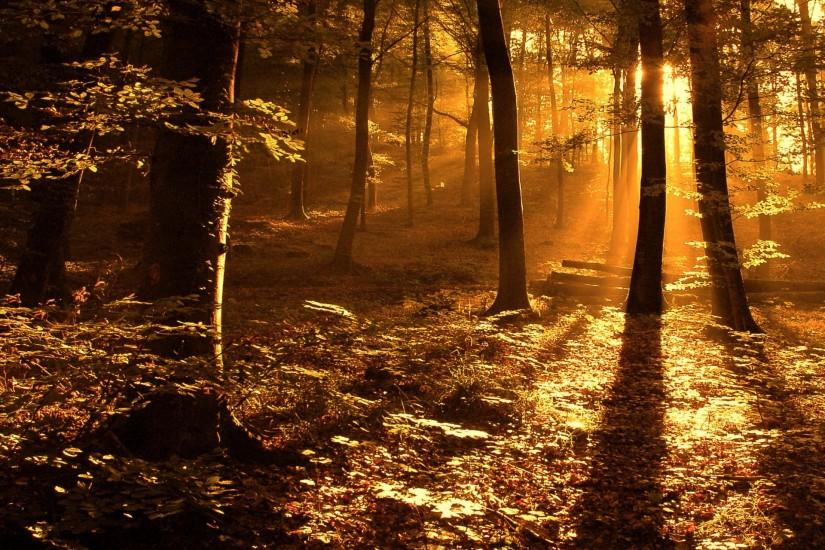 Sun ray in the woods Wallpaper Landscape Nature Wallpapers