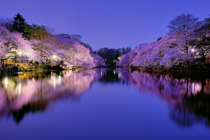 133 Cherry Blossom HD Wallpapers | Backgrounds - Wallpaper Abyss