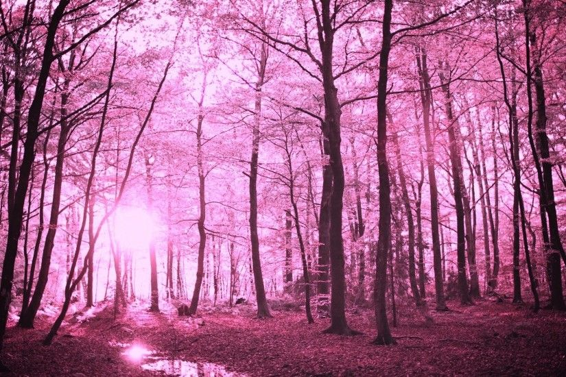 Forests - Enchanted Forest Purple Fantasy Pretty Nature Forests Woods Free  Wallpapers for HD 16:
