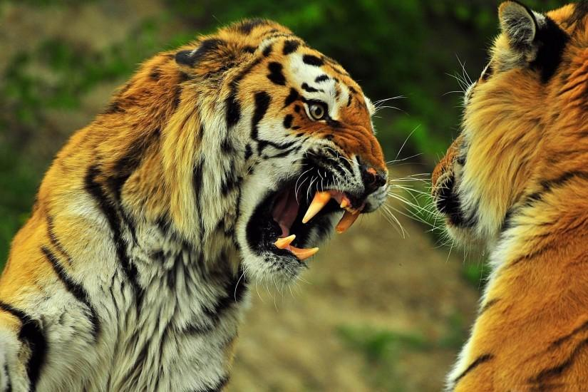 Wild Animals Wallpapers - HD Wallpapers Inn