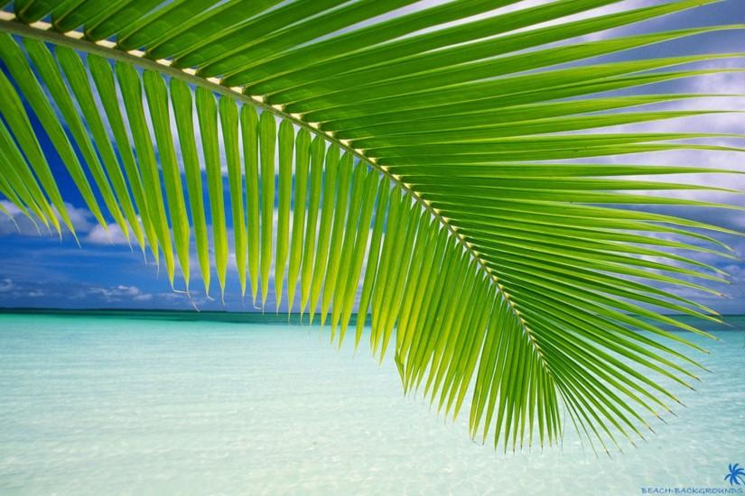 HQ RES Wallpapers of Palm Tree