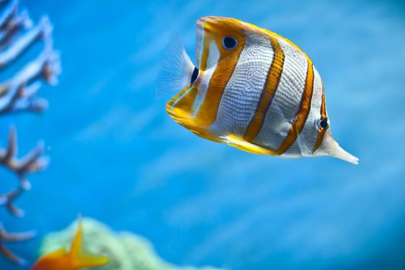 widescreen fish wallpaper 1920x1080 photos