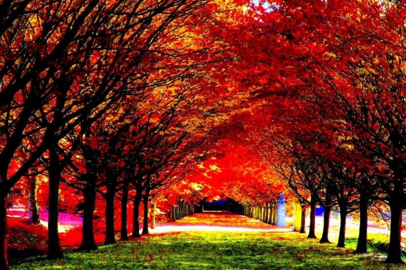 Fall Tag - Leaf Tree Season Landscape Seasons Leaves Color Fall Autumn  Forest Nature Beautiful Wallpapers