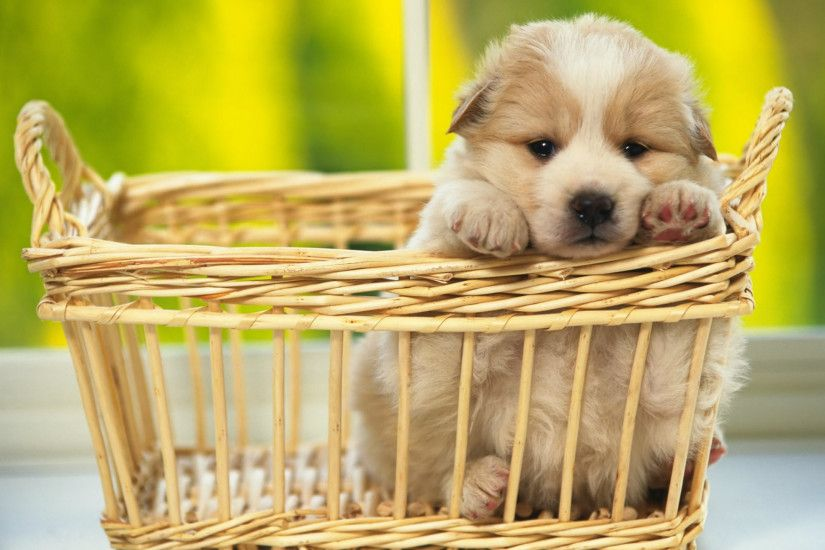 Cute Puppy Dog Wallpapers Image