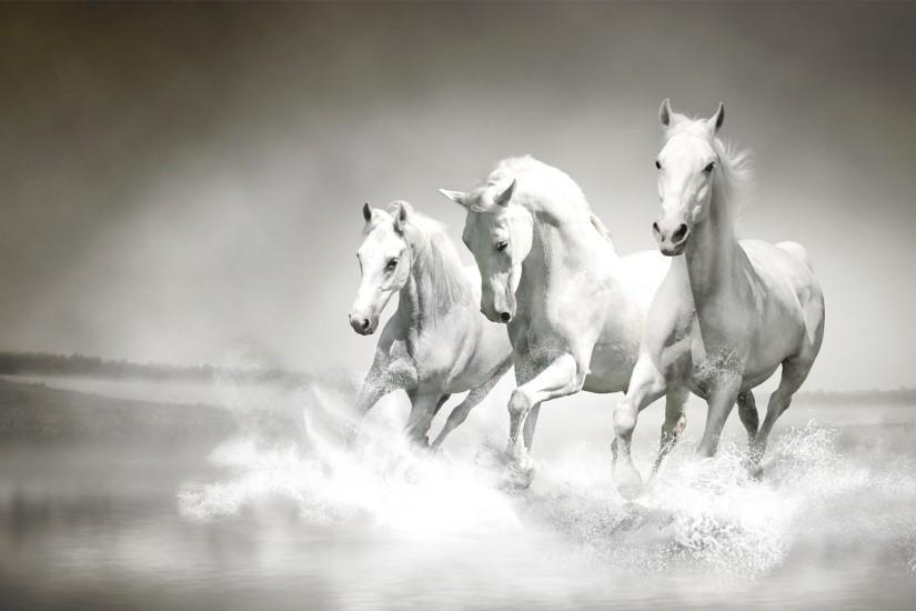 amazing horse wallpaper 1920x1080 for macbook