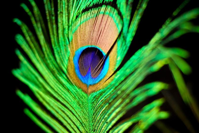 Peacock feather wallpaper - 778127