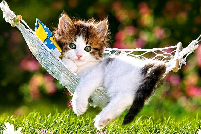 Cute Baby Cat Kittens Video Compilation Cute Cats Doing Funny Things  Compilation